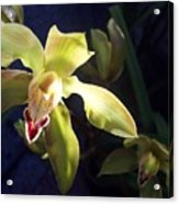 Yellow Cymbidium And Shadows Acrylic Print