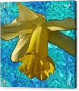 Yellow Daffodil 3 Acrylic Print