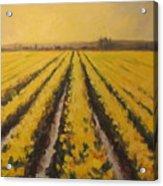 Yellow Daffodil Glow Acrylic Print