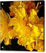 Yellow Daffodils 4 Acrylic Print