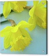 Yellow Daffodils Artwork Spring Flowers Art Prints Nature Floral Art Acrylic Print