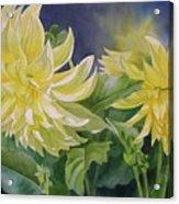 Yellow Dahlia Duet Acrylic Print
