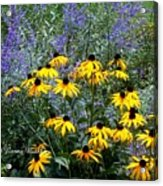 Yellow Daisies And Purple Sage Acrylic Print