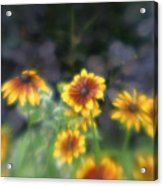 Yellow Daisies In Monets Garden Acrylic Print