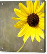 Yellow Daisy By Darrell Hutto Acrylic Print