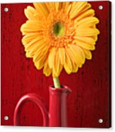 Yellow Daisy In Red Vase Acrylic Print