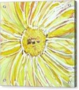 Yellow Daisy Portrait Acrylic Print