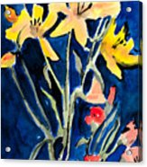 Yellow Daylilies Acrylic Print