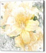Yellow Daylily Acrylic Print