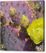 Yellow Desert Bloom Acrylic Print
