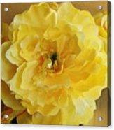 Yellow Elagance Acrylic Print