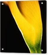 Yellow Essence Acrylic Print