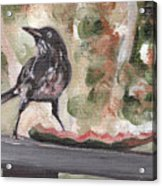 Yellow Eyed Bird Acrylic Print by Sarah Lynch
