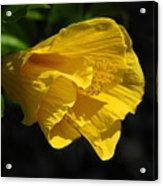Yellow Fellow Acrylic Print