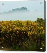 Yellow Field And The Fog Acrylic Print