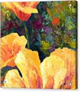 Yellow Field Poppies Acrylic Print