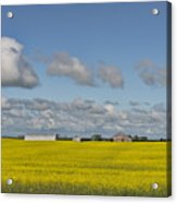 Yellow Fields And Blue Clouds Acrylic Print