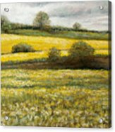 Yellow Fields Acrylic Print