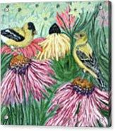 Yellow Finches Acrylic Print