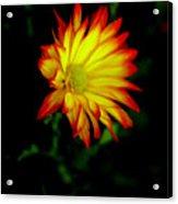Yellow Fire Acrylic Print