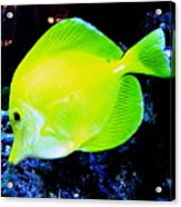 Yellow Fish Acrylic Print