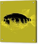 Yellow Fish Acrylic Print
