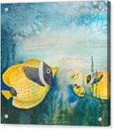 Yellow Fish Yellow Fish Acrylic Print