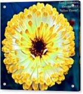 Yellow Flower H A Acrylic Print