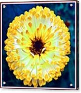 Yellow Flower H B With Decorative Ornate Printed Frame Acrylic Print