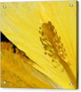Yellow Flower - Hibiscus Shadow - Sharon Cummings Acrylic Print