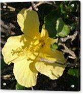 Yellow Flower In The Shade Acrylic Print