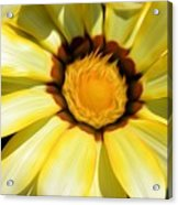 Yellow Flower In The Sun Acrylic Print