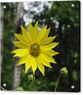 Yellow Flower In Woods Acrylic Print