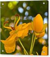 Yellow Flower Acrylic Print by Lori Kesten