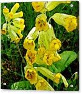 Yellow Flowers 2 Acrylic Print