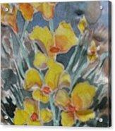 Yellow Flowers At Arboretum Acrylic Print