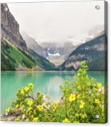Yellow Flowers At Lake Louise Acrylic Print