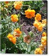 Yellow Flowers Bushes Acrylic Print