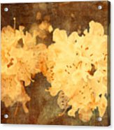 Yellow Flowers In Bloom Acrylic Print