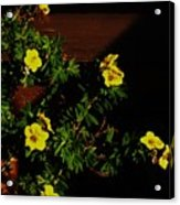 Yellow Flowers In The Sun Acrylic Print