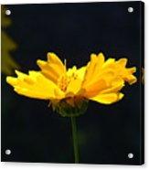 Yellow Flowers2 Acrylic Print
