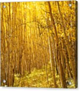 Yellow Forest Trail Acrylic Print