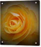 Yellow Glow Acrylic Print