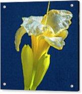 Yellow Glue Blue #f9 Acrylic Print