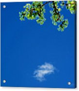 Yellow Green Flowers And Sky Ae 2  Acrylic Print