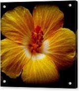 Yellow Hi Acrylic Print