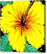 Yellow Hibiscus Acrylic Print