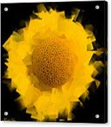 Yellow Hope Acrylic Print