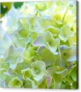 Yellow Hydrangea Flowers Art Prints Baslee Troutman Acrylic Print