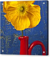 Yellow Iceland Poppy Red Pitcher Acrylic Print by Garry Gay
